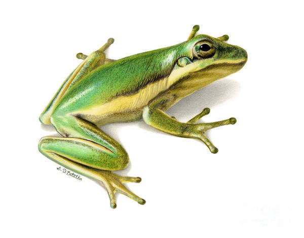Frog Art Print featuring the painting Green Tree Frog by Sarah Batalka
