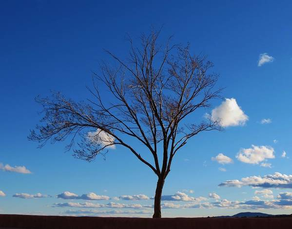 Tree Print featuring the photograph Waiting For Spring by Feva Fotos