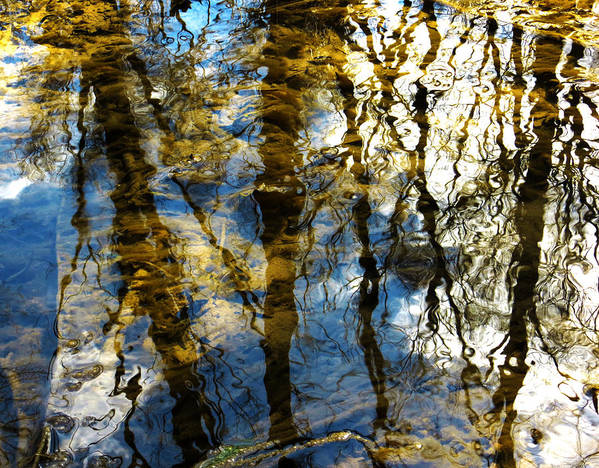 Reflection Art Print featuring the photograph Woodland Reflections by Shawna Rowe