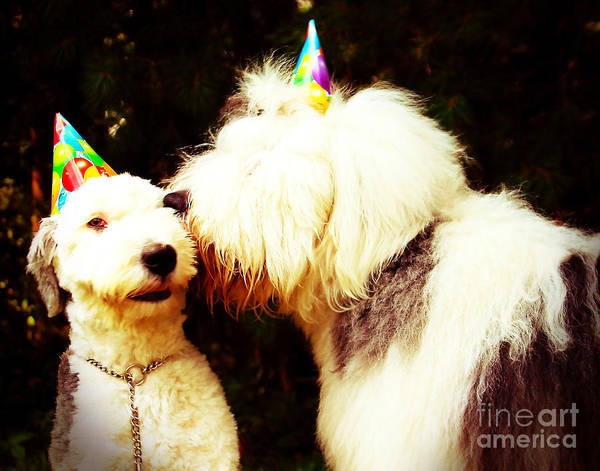 Old English Sheepdogs Art Print featuring the photograph A Birthday Kiss by Alene Sirott-Cope