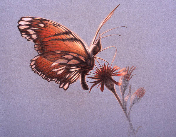 Butterfly Art Print featuring the painting Girawheen Place Of Flowers by Shawn Kawa
