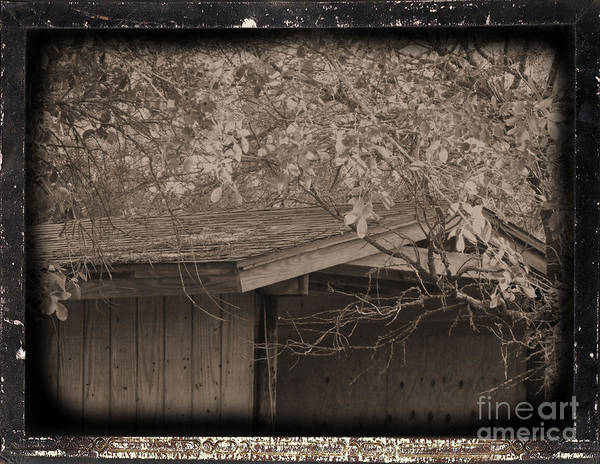 Landscape Art Print featuring the photograph Oldshed by Tammy Herrin