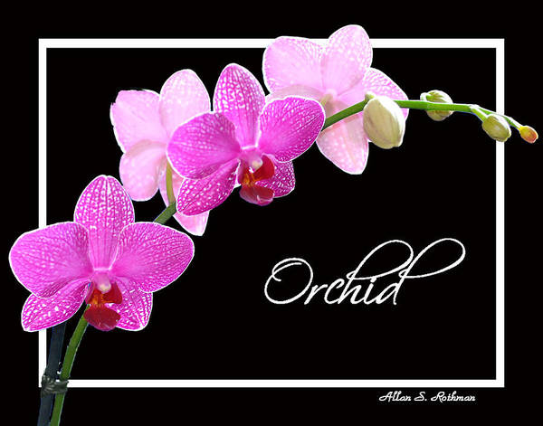 Orchid Art Print featuring the photograph Orchid 2 2 by Allan Rothman