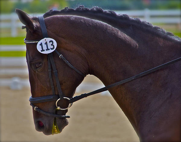 Dressage Art Print featuring the photograph 113 Guiness by Sherri Cavalier