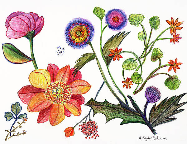 Flowers Nature Botany Drawing Julie Richman Flora Pencil Art Print featuring the painting Botanical Flower-45 Odd Flowers by Julie Richman