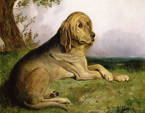 Bloodhound Print featuring the painting A Bloodhound In A Landscape by English school