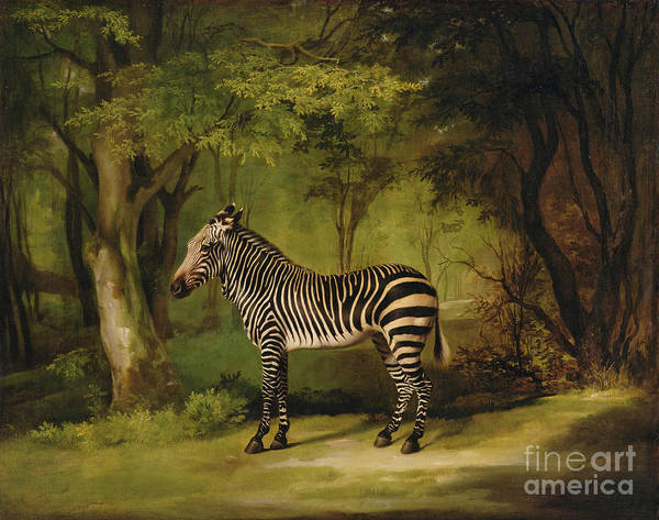 Zebra Print featuring the painting A Zebra by George Stubbs