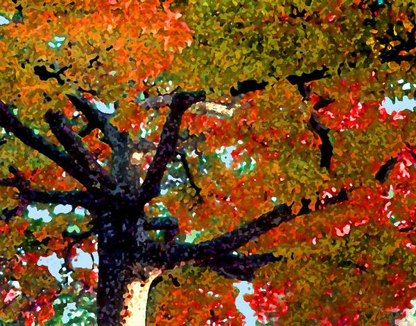Fall Art Print featuring the photograph Autumn Tree by Steve Karol