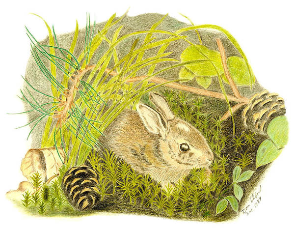 Rabbit Art Print featuring the drawing Baby Bunny Down For The Night by Daniel Shuford