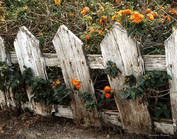Flowers Art Print featuring the photograph Elsinore Fence by Lawrence Costales