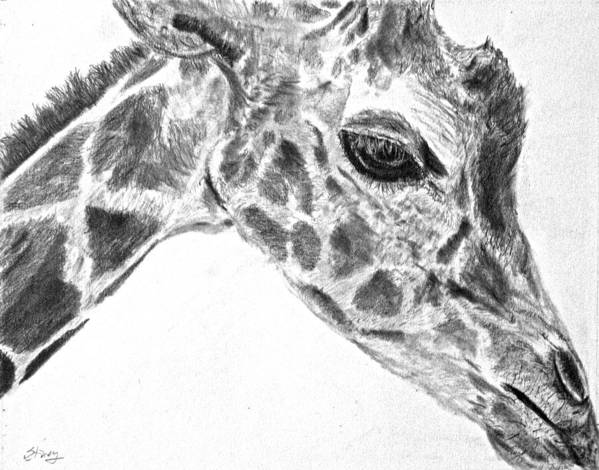 Giraffe Art Print featuring the drawing Here's Looking At You by Tina Storey
