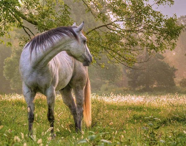 Horse Art Print featuring the photograph Hindsight by Ron McGinnis
