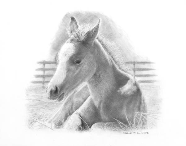 Horse Art Print featuring the drawing Lily by Douglas Kochanski