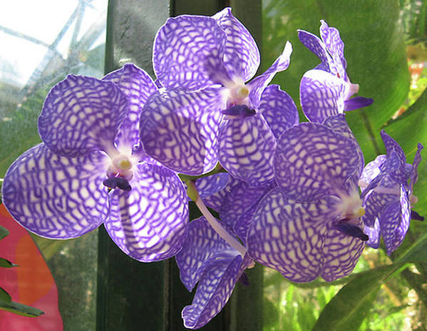 Orchid Art Print featuring the photograph Orchid by Darren Stein