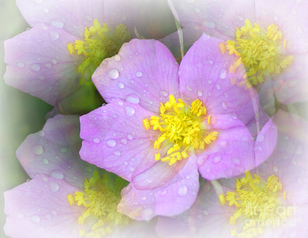 Flowers Art Print featuring the photograph Purple Prism by Marty Koch