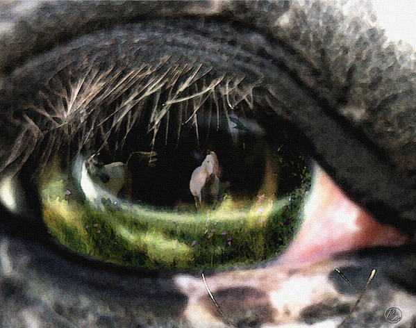 Horse Art Print featuring the photograph Reflection by Perri Kelly