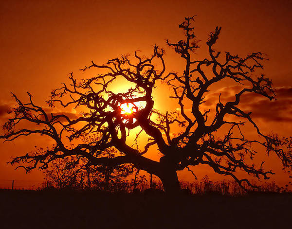 Spooky Print featuring the photograph Spooky Tree by Stephen Anderson