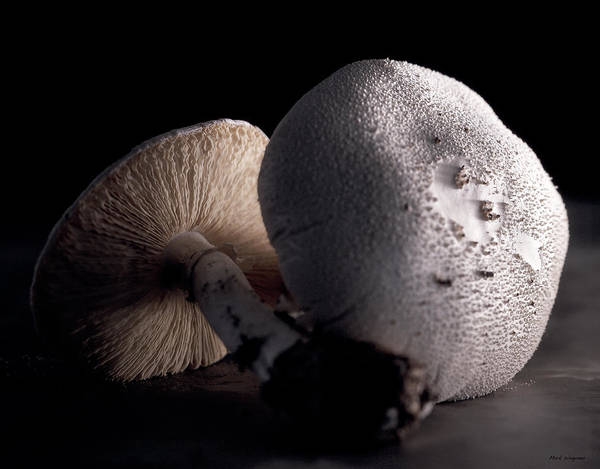 Nature Art Print featuring the photograph Still Life Two Mushrooms by Mark Wagoner