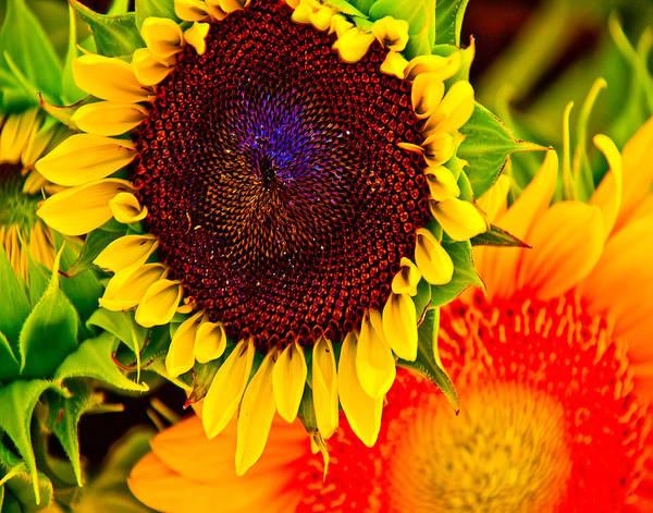 Sunflower Art Print featuring the photograph Sunflower Joy by Jennifer Lycke