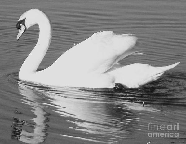 Swan Art Print featuring the painting Swan Reflection by Eric Schiabor