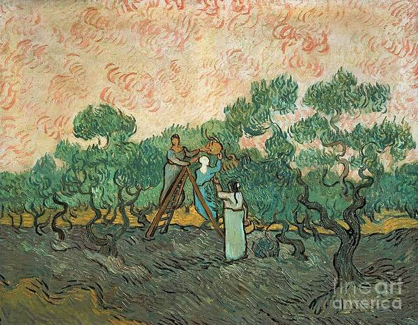 The Art Print featuring the painting The Olive Pickers by Vincent van Gogh