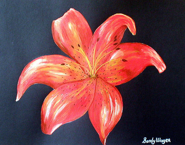 Flora Art Print featuring the painting Tiger Lily by Sandy Wager