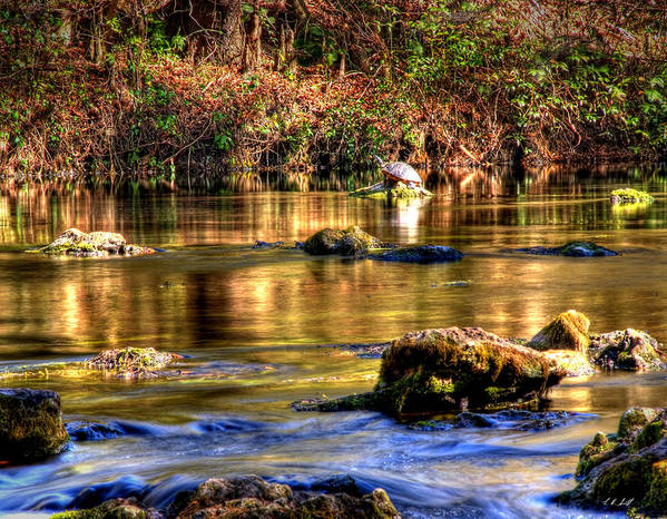 Hdr Art Print featuring the photograph Turtle Creek by E R Smith