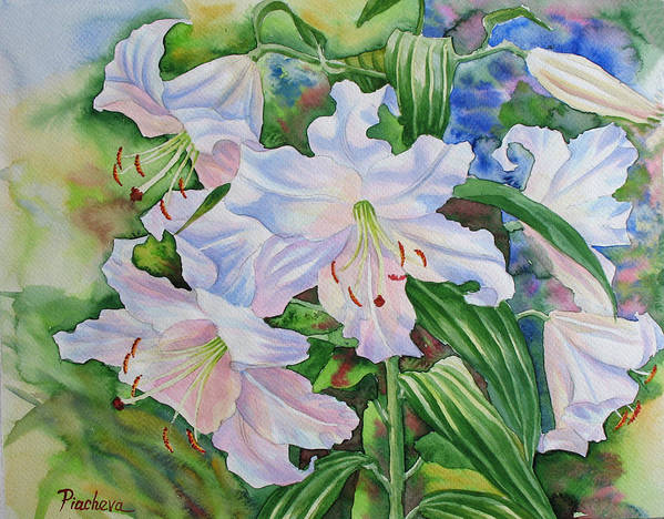 Watercolor Art Print featuring the painting White Lily. 2007 by Natalia Piacheva