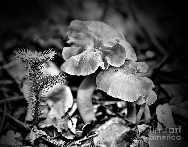 Mushrooms Art Print featuring the photograph Woodland Mushrooms In Black And White by Smilin Eyes Treasures