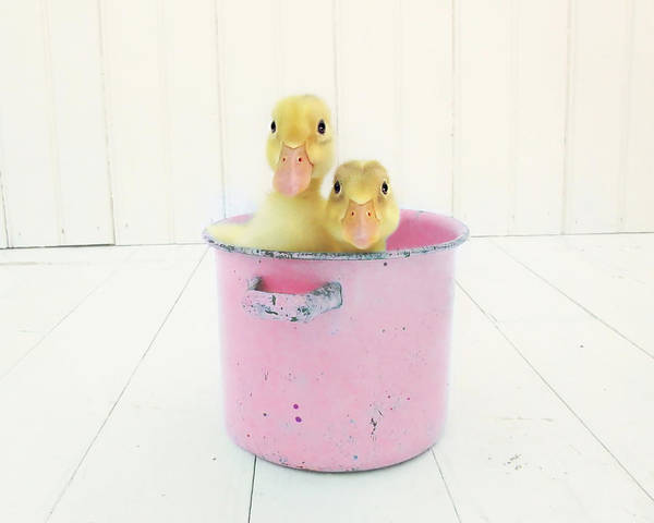 Duck Art Print featuring the photograph Duck Soup by Amy Tyler