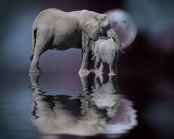 Mother And Baby Elephant Art Print featuring the digital art Security by Nichon Thorstrom