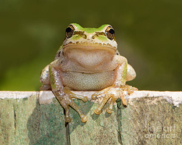 Frog Art Print featuring the photograph Someone Watching Over Me by Mimi Ditchie