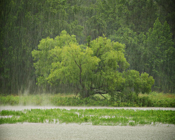 Rain Print featuring the photograph 1307-4983 Rainy Lake Ludwig by Randy Forrester