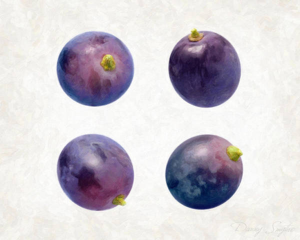 Concord Grapes Print featuring the painting Concord Grapes by Danny Smythe