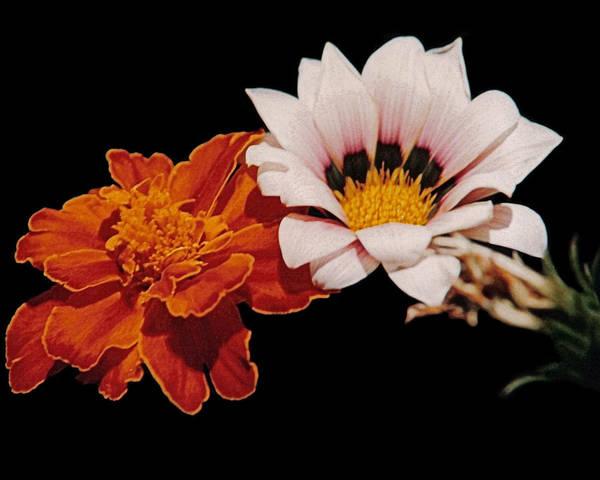 Original Art Print featuring the photograph Flowers by J D Owen