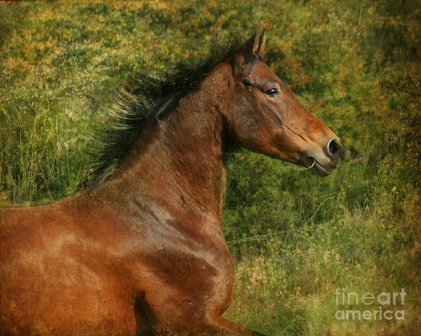 Horse Art Print featuring the photograph The Bay Horse by Angel Ciesniarska