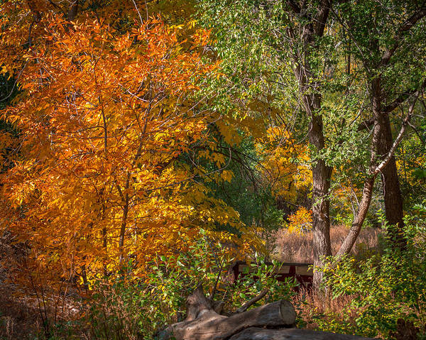 Tree Art Print featuring the photograph Along The Trail by Ernie Echols