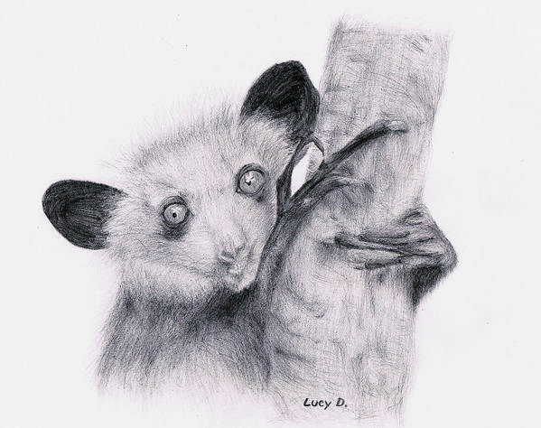 Wildlife Art Print featuring the drawing Aye-aye by Lucy D