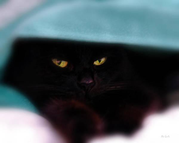 Cat Art Print featuring the photograph Black Cat Secrets by Bob Orsillo