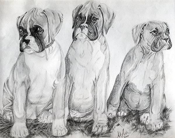 Boxer Puppy Dog Poster Print Art Print featuring the drawing Boxer Puppy Dog Poster Print by Olde Time Mercantile