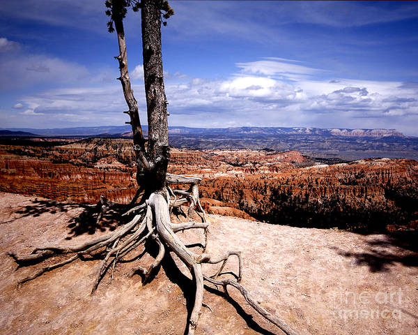 Richard Smukler Photography Art Print featuring the photograph Bryce Canyon State Park by Richard Smukler
