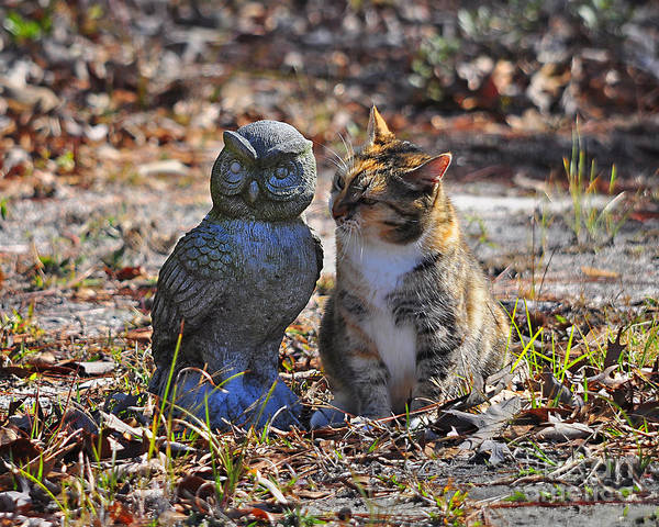 Cat Art Print featuring the photograph Calico Cat And Obtuse Owl by Al Powell Photography USA