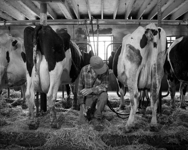 Farm Art Print featuring the photograph Chores 7 by Mike Tanner