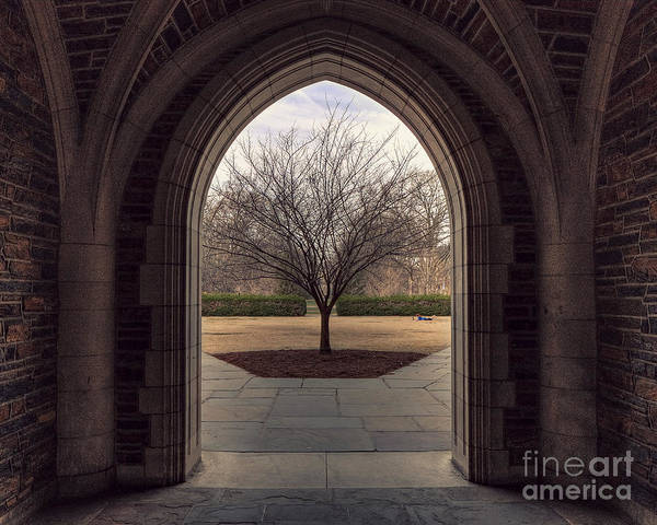 Tree Art Print featuring the photograph Coming Out by Emily Kay