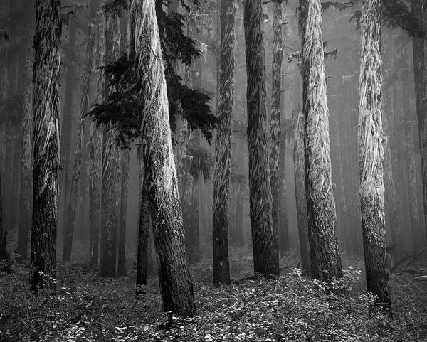 Black And White Art Print featuring the photograph Deep Forest by Leland D Howard