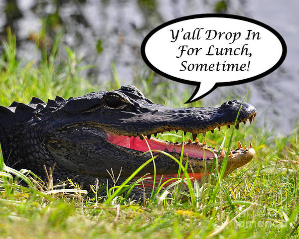 Drop In For Lunch Art Print featuring the photograph Drop In For Lunch Greeting Card by Al Powell Photography USA