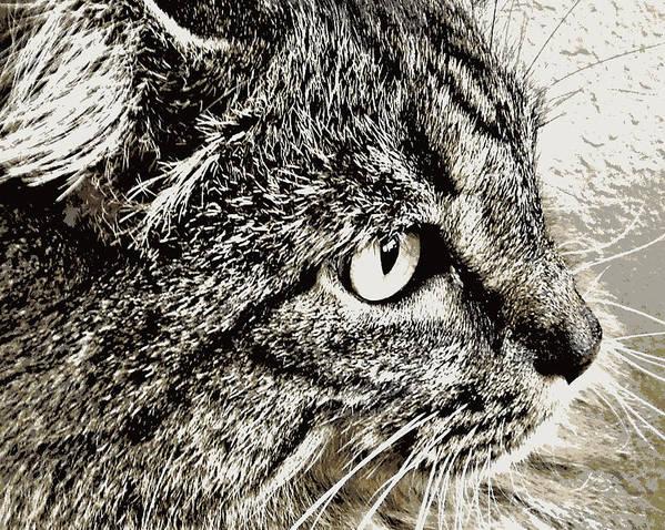 Facial Art Print featuring the photograph Facial Fur by Heidi Manly