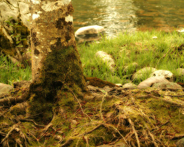 Tree Art Print featuring the photograph Firmly Rooted by Bonnie Bruno