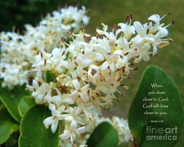 Flower Art Print featuring the photograph Honeysuckle #2 by Robert ONeil