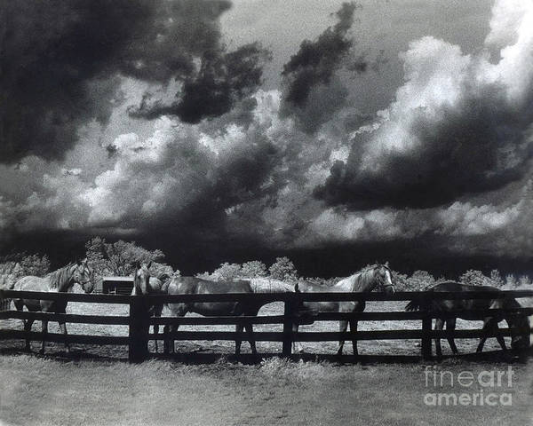 Surreal Infrared Horses Art Print featuring the photograph Horses Black And White Infrared Stormy Sky Nature Landscape by Kathy Fornal